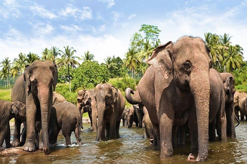 destination-yala-sri-lanka